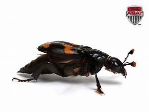 Insecte Qui Mange Le Bois : insectes ~ Farleysfitness.com Idées de Décoration