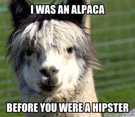 Alpaca Meme Alpaca Memes Www Imgkid The Image Kid Has It