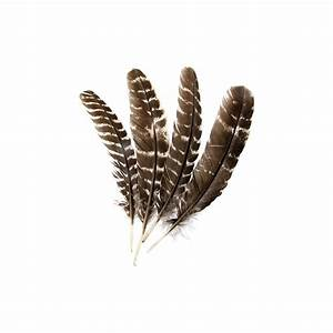 Image Gallery indian eagle feather