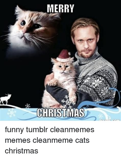 Merry Christmas Cat Meme - 25 best memes about cat christmas cat christmas memes