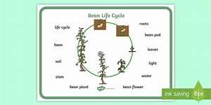 Bean Growth Word Mat