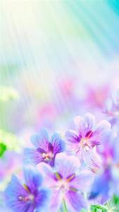 Flowers Wallpaper flowers phone wallpapers flower android ...