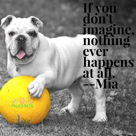 imagination happiness quotes dogs