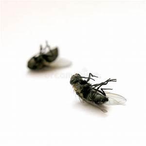 Fliegen Im Fensterrahmen : tote fliegen stockbild bild von fliege fliegen makro 32609 ~ Buech-reservation.com Haus und Dekorationen