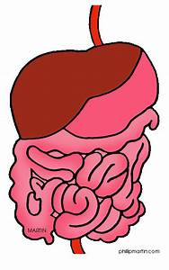 Digestive Clipart 20 Free Cliparts