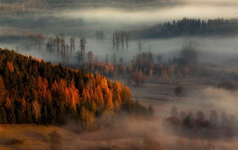 nature landscape fall mist forest sunrise trees