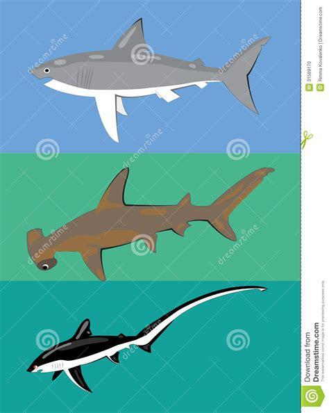 types  sharks stock vector image  black