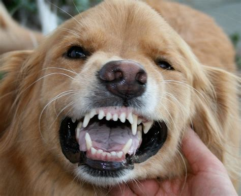 How To Brush Your Dog S Teeth And Keep Your Fingers Rover Blog