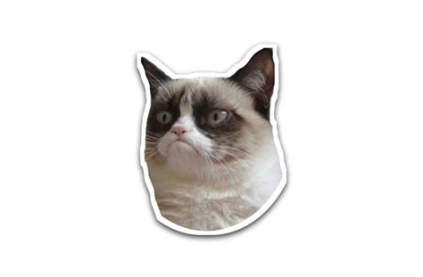 Gallery For > Grumpy Cat Face Png