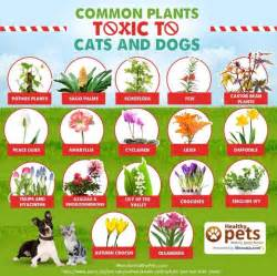 35 best Poisonous plants for dogs images on Pinterest ...