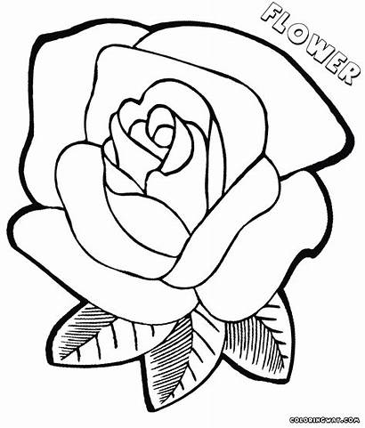 Flower Coloring Pages Colorings