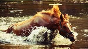 Horse running through water | Paulette Matalas | Pinterest