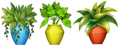 pflanzen im topf kostenlose vektor kunst archiv grafiken bilder herunterladen