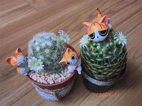 ขี้หวง #แคคตัส #กระบองเพชร #cactus