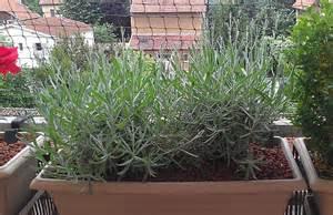 Plantes De Bureau Sans Soleil by Quelle Plante Mettre Sur Un Balcon En Plein Soleil