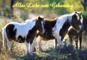 geburtstagssprüche für den liebsten tina r perez geburtstagsspruche pferde