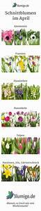 Welche Blumen Blühen Im August : 25 great ideas about hochzeitsblumen saison on pinterest blushfarbene brautstr u e ~ Orissabook.com Haus und Dekorationen