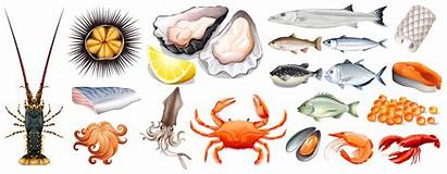 Seafood Different Kinds Vector Illustration Clipart Graphics