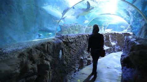 aquarium a visiter en visite de l aquarium sea de benalmadena