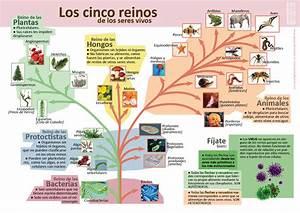 Infografías de Ciencias Naturales aulaciclo3