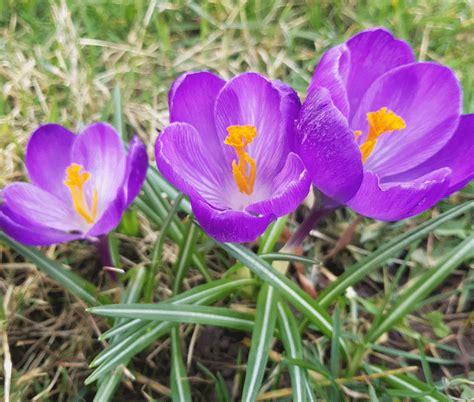 Pārāk agri uzziedējušas puķes - Arbūzs
