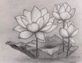 sketches of lotuses 的圖片結果