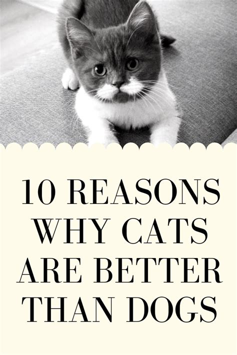 cats dogs better than facts cat funny reasons why