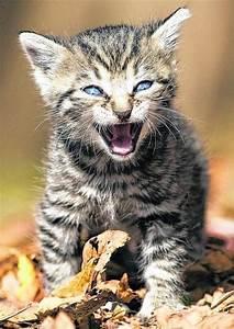 Katze Im Haus Halten : haus und wildtierhilfe ohne grenzen e v ~ Lizthompson.info Haus und Dekorationen