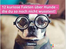 Die 12 kuriosesten Fakten über Hunde – Petfindu Blog