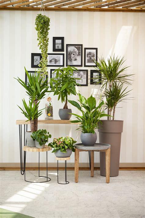 Le piante grasse pendenti sono specie vegetali impiegate a scopo ornamentale. Garden Center è il tuo centro giardinaggio di fiducia nel ...