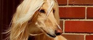 Top 10 Crazy Cool Dog Breeds - Care.com Community