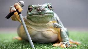 Looking For A Singer  Why Not A Frog