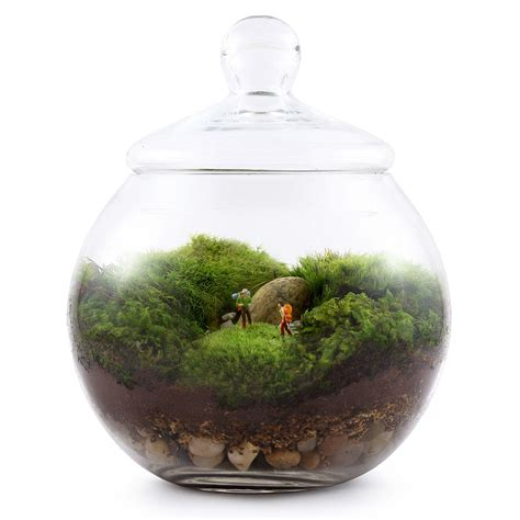 terrarium moss for sale uncharted territory terrarium moss terrarium glass uncommongoods