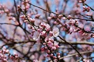 Welche Bäume Blühen Jetzt : fr hlingsboten hast du schon welche entdeckt wissen stuttgarter kinderzeitung ~ Buech-reservation.com Haus und Dekorationen