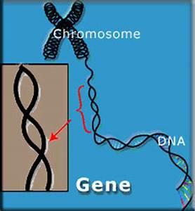 Sanddorn Männlich Weiblich Unterschied : genetik bei katzen ~ Lizthompson.info Haus und Dekorationen