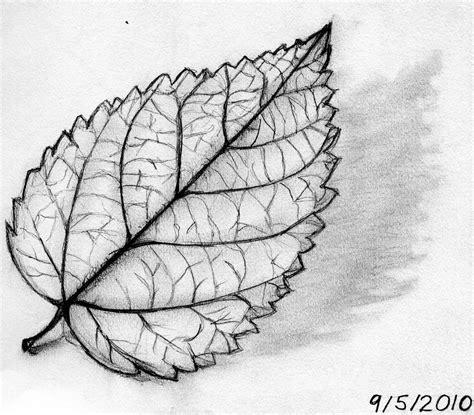 leaves  drawing concert winstel leaf   product