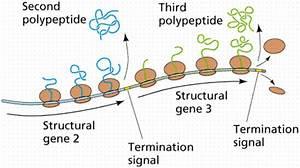 Gene Control