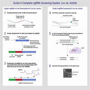 Tools For Successful Crispr  Cas9 Genome Editing