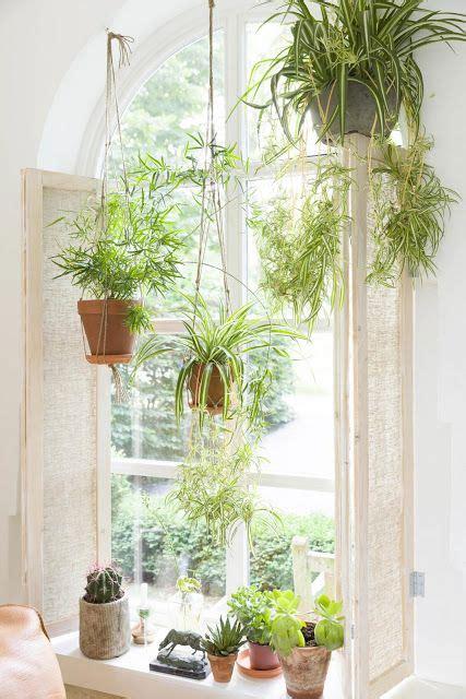 Best Indoor Window Sill Plants by Best 25 Window Plants Ideas On Minimal