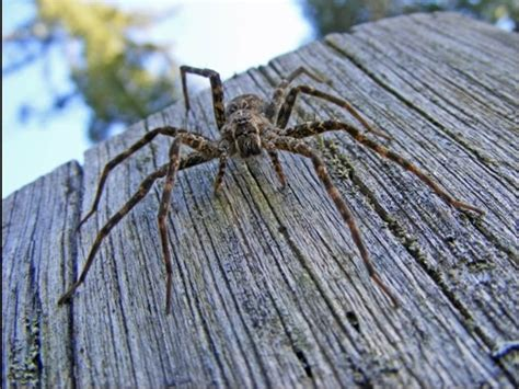 Boat Dock Spiders by Dock Spider Friend Or Foe Gt Thousand Islands