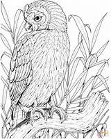 Owl Coloring Pages Printable Perched Owls Adults Realistic Drawing Birds Sheets Bird Burrowing Adult Colouring Coloringpages101 Visit Getdrawings Tablets Compatible sketch template