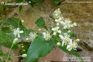Unkraut Weiße Blüte : wildblumen am wegesrand im august ~ Lizthompson.info Haus und Dekorationen