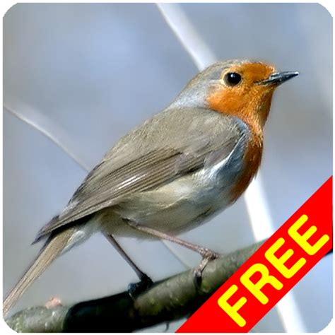 birds sounds amazon ca appstore for android