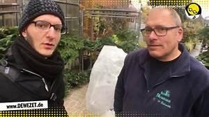 Pflanzen Winterfest Machen : tipps vom profi pflanzen winterfest machen youtube ~ A.2002-acura-tl-radio.info Haus und Dekorationen