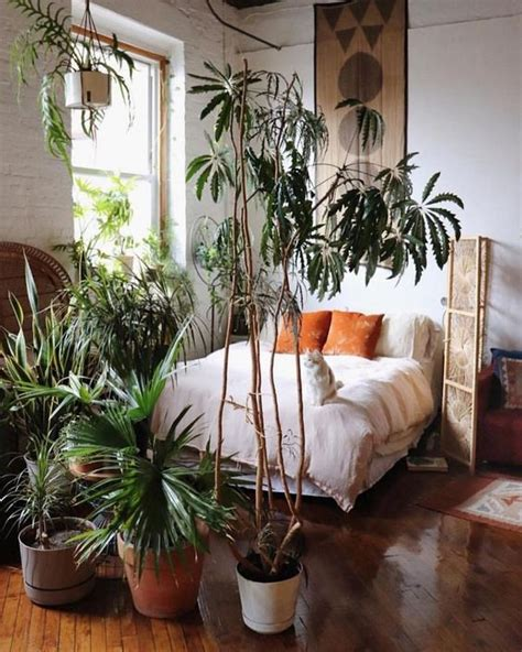 ways  style air purifying  cool  plants
