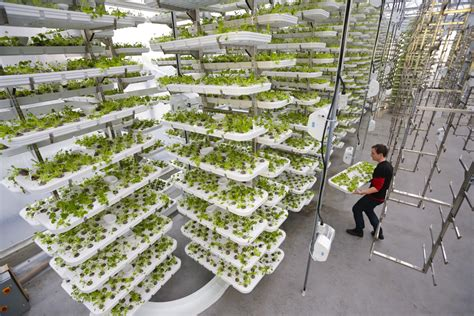 indoor vertical garden to feed humankind we need the farms of the future today