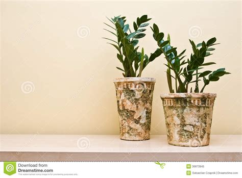 plants in decorative clay pots stock image image 36873945