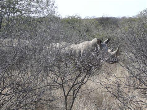 Botsuana-Reisebericht: