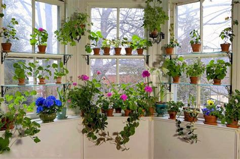 Flowering House Plants For Windows by House Living Redecorating The Library