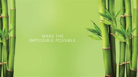 bamboo wallpapers  background images stmednet